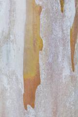 eucalyptus tree bark texture background image