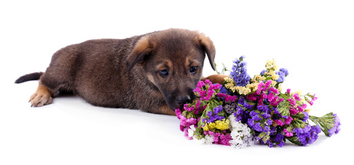 Puppy and bouquet of fresh flowers isolated on white
