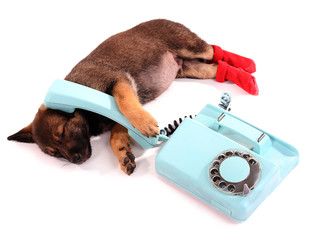 Sleeping puppy in red socks and blue phone isolated on white
