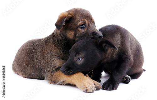 Leinwandbild Motiv Two funny puppies isolated on white