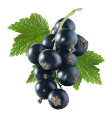 Black currant 2 with leaf isolated on white background