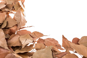 dried leafs as a border on white with copy space