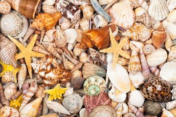 Maritimer Hintergrund aus vielen verschiedenen Muscheln