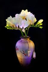White freesia in vase