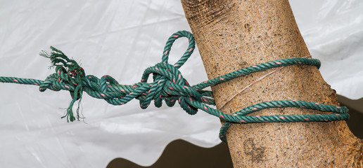 Knot the rope attached to the tree.