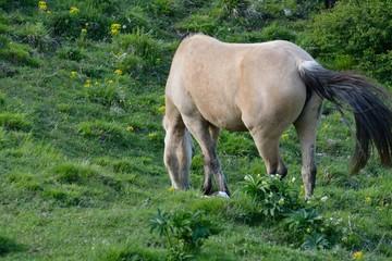 Cavalli 7