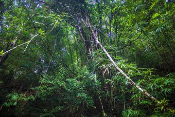 Jungle at Khao Yai National Park, Thailand
