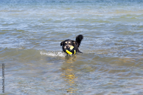canvas print picture Bathing Dog