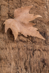 dried autumn leaf on wooden surface