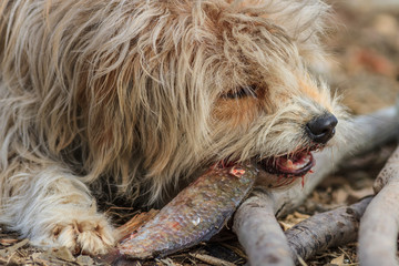 dog eating a fish