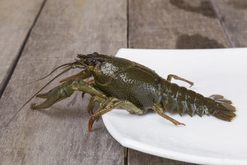 Green crayfish on the square plate on wooden background close-up