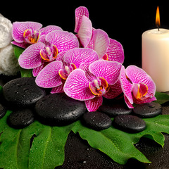 spa set of blooming twig of stripped violet orchid (phalaenopsis