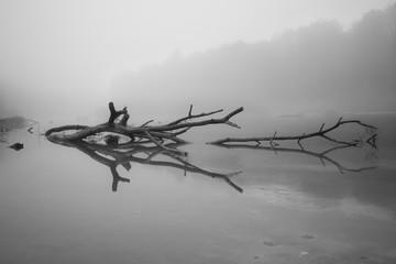 Baumspiegelung im Nebel