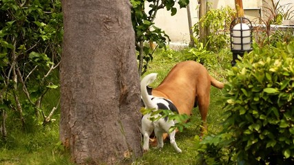 Best Dog Friends Playing Outdoors in Garden. Sweet Dog Couple.