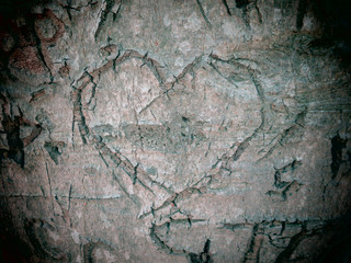 A heart carved into the bark of a beech tree.