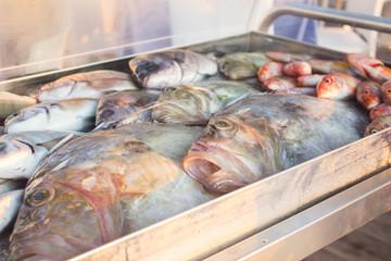 Fresh fish in iceboz