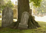 Tombstone and Tree