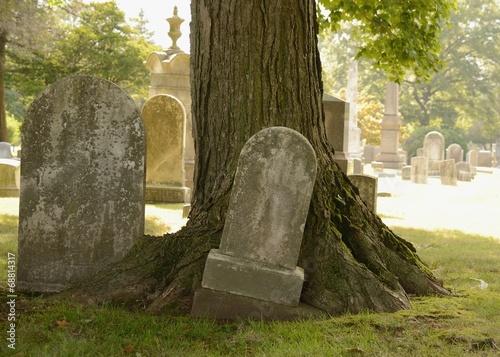 Plexiglas Begraafplaats Tombstone and Tree