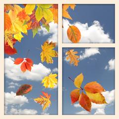 Vivid autumn leaves outside window