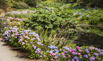Path by the stream at Trebah Gardens, Cornwall