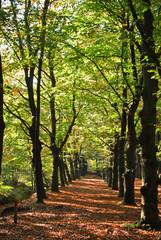 Mooi wandelpad in de herfst