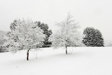 Trees covered with snow in winter landscape