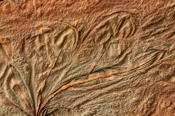 texture of the old dry leaf