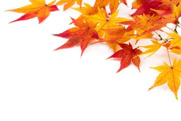 Herbstblätter vor weißem Hintergrund