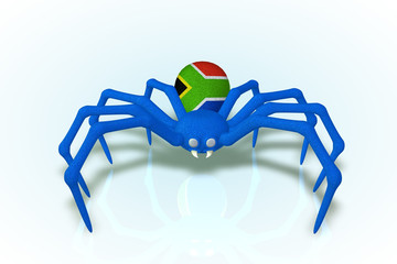 South Africa Flag Spider