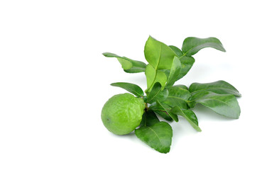 Fresh kaffir lime with leaf isolated on white background