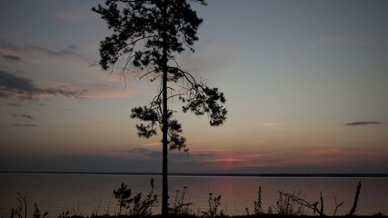 Stock Video Footage Pine at sunset, northern lake