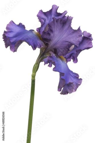 Papiers peints Iris iris