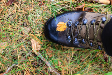 Yellow autumn leaf on a trekking boot