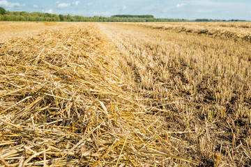 Straw on a large stubble field