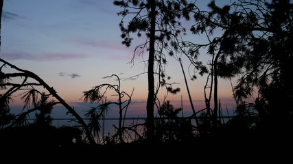 Stock Video Footage Spruce branches against the evening sky