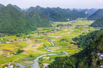 rice field in valley in Bac Son, Vietnam