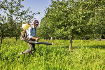 Senior farmer spraying the orchard