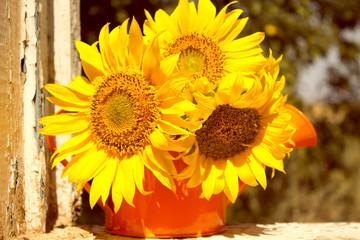 Sunflowers. Summer.