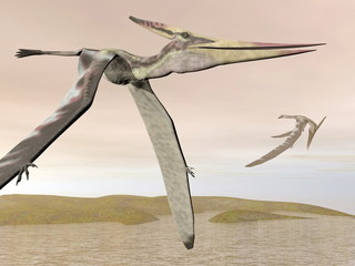 Pteranodon flying - 3D render