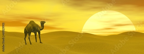 Fototapeta Camel in the desert - 3D render