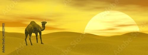 Naklejka Camel in the desert - 3D render