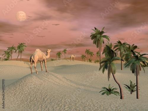 Naklejka Camels in the desert - 3D render