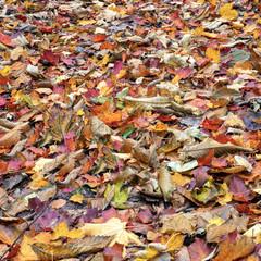 buntes Herbstlaub auf dem Waldboden