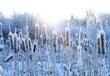 frost, winter, snow on the old grass