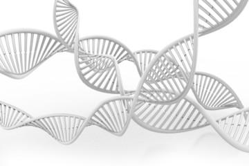DNA molecule.