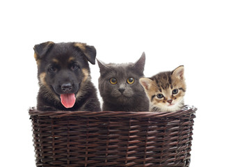 kittens and a puppy in a wicker basket
