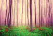 Fantasy forest trees background