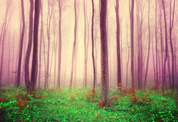 Fantasy forest trees background © robsonphoto