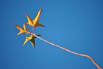 Prachtige blauwe lucht met herfst tak