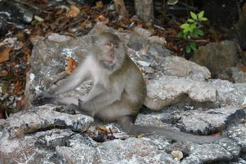 Monkey thinking..